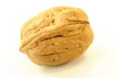 определите грецкий орех Стоковое Изображение RF