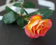 Определите розовую горизонтально с лентой Стоковые Изображения