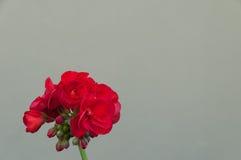 Определите розовую против monochrome предпосылки стоковое изображение rf
