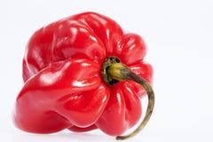 Определите habanero перца красного chili изолированный на белой предпосылке, c Стоковая Фотография RF