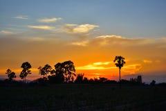 Опрокинутый заход солнца пальмы Стоковая Фотография RF