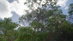 Опрокиньте вверх по съемке от пляжа к зеленым деревьям сток-видео