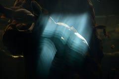 Оптически влияния стоковое фото rf