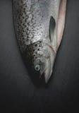 Опустошанная salmon головная предпосылка темноты натюрморта Стоковое фото RF