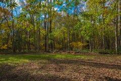 Опушка леса Стоковое Изображение