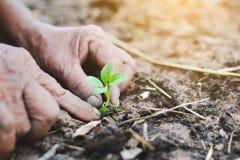 Опытные человеки засаживая молодой овощ Стоковое Изображение RF