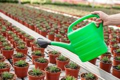 Опытный старый садовник моча заводы на Стоковое фото RF