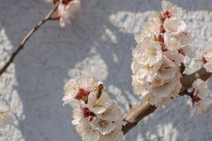 Опыление цветка пчел меда Стоковые Фото