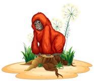 Орангутан Стоковая Фотография RF
