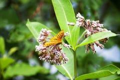 Оранжевая бабочка на группе цветков Стоковые Фото