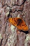 Оранжевая бабочка Стоковые Фотографии RF