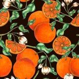 Оранжевая безшовная рука картины покрашенная в акварели иллюстрация вектора