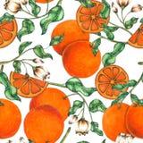 Оранжевая безшовная рука картины покрашенная в акварели иллюстрация штока