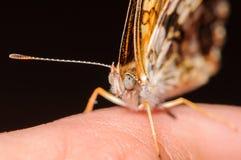 Оранжевая и белая бабочка на человеческой руке Стоковые Фото