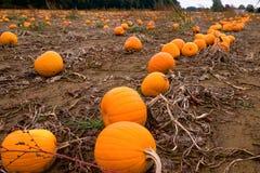 Оранжевая и желтая ферма тыквы Стоковая Фотография