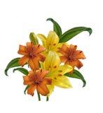 оранжевая и желтая лилия на белой предпосылке иллюстрация штока