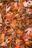 Оранжевая картина листьев осени Вертикальная ориентация Стоковое фото RF