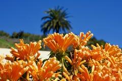 Оранжевая лоза трубы перед голубым небом и ладонью Стоковые Изображения