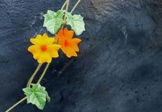 Оранжевая лоза трубы clockvine или апельсина на стене стоковая фотография rf