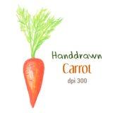 Оранжевая морковь пастелью масла изолированной на белой предпосылке Иллюстрация свежей моркови handdrawn Стоковые Фото