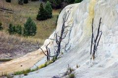 Оранжевая насыпь весны на Mammoth Hot Springs Стоковое Изображение RF