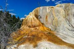 Оранжевая насыпь весны Стоковая Фотография RF