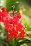 Оранжевая орхидея на ветви Стоковое Фото