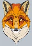 Оранжевая одичалая лиса на серой предпосылке Стоковое фото RF