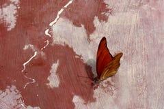 Оранжевая питьевая вода бабочки Стоковое фото RF