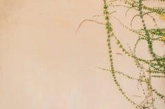 Оранжевая текстура бетонной стены Стоковая Фотография