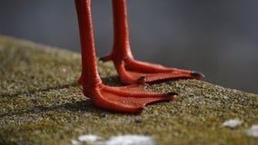 Оранжевая тень бросания ног Стоковые Фото