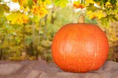Оранжевая тыква на мешке Стоковые Изображения