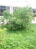 Оранжевое дерево с зеленой травой Стоковое Изображение