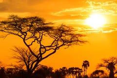 Оранжевое зарево африканского захода солнца Стоковое Изображение RF