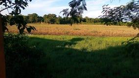 Оранжевое и зеленое поле Стоковое Изображение RF