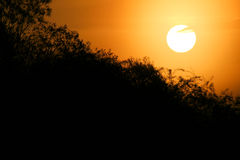 Оранжевое утро Стоковые Фото