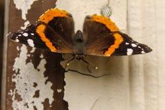 Оранжевое Butterly Стоковые Фото