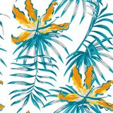 Оранжевое gloriosa крася картину голубого цвета безшовную Стоковое Изображение