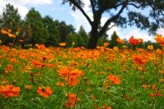 Оранжевое Wildfowers Стоковые Изображения