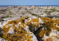 Оранжевое xanthoria lichenized грибок растя на основе известняка прибрежной со скалами и море в расстоянии в Кипре стоковые изображения rf