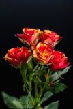 Оранжевокрасный кустарник цветка поднял на черную предпосылку Стоковое фото RF