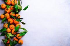 Оранжевые апельсины tangerines, мандарины, Клементины, цитрусовые фрукты с зелеными листьями на светлой предпосылке, космосе экзе Стоковые Изображения