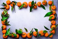 Оранжевые апельсины tangerines, мандарины, Клементины, цитрусовые фрукты с зелеными листьями на светлой предпосылке, космосе экзе Стоковая Фотография RF