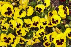 Оранжевые желтые цветки blommong в саде стоковые изображения
