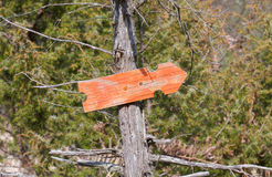 Оранжевые знаки стрелки на дереве Стоковая Фотография RF