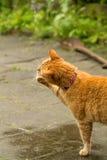 Оранжевые игры кота с капельками воды Стоковые Изображения