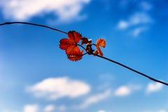 Оранжевые листья дерева против неба и облаков Стоковое фото RF