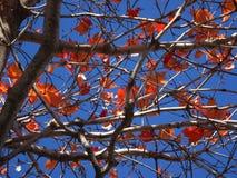 оранжевые листья падения и голубое небо стоковая фотография rf