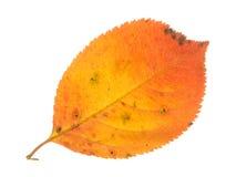 Оранжевые лист и белая предпосылка Стоковые Фотографии RF