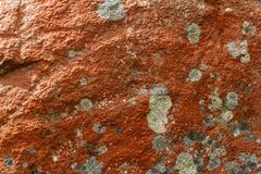 Оранжевые лишайники стоковое фото rf